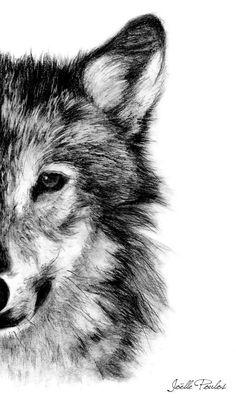 Wolf Fine Art PRINT, Illustration Print, Art Print, Pencil Drawing, Pencil…