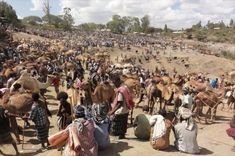 Cattle Market – Bati, Ethiopia. Bati is a town situated between the Ethiopian highlands and the Great Rift Valley. Vendors travel with their livestock for days to reach the famed markets, which can attract up to 20,000 people every Monday. Click photo to play sound from www.thetouchofsound.com