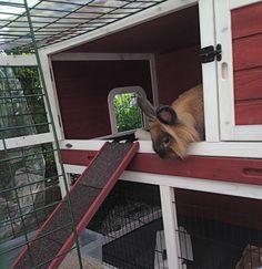 Er du der nede brodern??? Hva syns du?? Stilig at jeg fikk to etasjer assa!! Er ikke dette råflott?? Are you down there Bro?? Isn´t it just so cool??? I´ve got two floors and stair!! By IJ 27.6.14