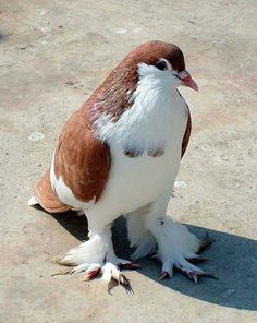 A pigeon. I do not know what kind, sorry. But it's just so pretty.