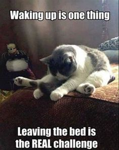 Funny Animal Pictures Of The Day - 17 Images - Oh this is so me today! I'm sure I'll sleep well tonight too.