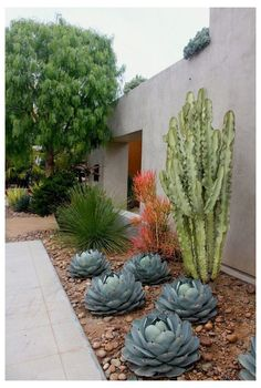 Succulent Landscaping, Landscaping With Rocks, Modern Landscaping, Front Yard Landscaping, Dessert Landscaping, Cheap Landscaping Ideas, Commercial Landscaping, Florida Landscaping, Landscaping Supplies