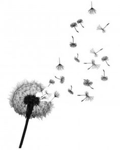 I want this as my 3rd tattoo... a Dandelion Tattoo that has Jeremiah 29:11 by it :) lower back