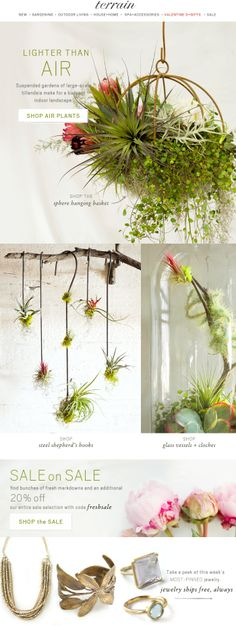 Suspended Gardens: Our tillandsia gardens are lighter than air. #airplants #tillandsia