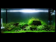 Mystical aquascape.  Lots of great fish tank landsacpes in this flickr pool