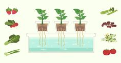 Your Introduction to Hydroponics