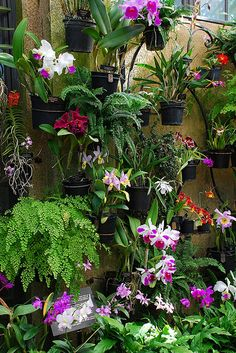 Longwood has over orchids in their greenhouses, and approximately 300 are in the orchid room at any given time. Orchids Garden, Orchid Plants, Tropical Landscaping, Tropical Plants, Tropical Gardens, Exotic Flowers, Beautiful Flowers, Garden Art, Garden Design