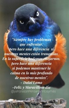 Inspirational Phrases, Daily Inspiration Quotes, Dalai Lama, Spanish Quotes, Mornings, Spirituality, Hollywood, Princess, World
