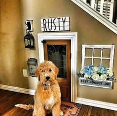 Which is more cute, the dog or his little dog house? 😍🐶 TAG a friend who will love this and needs this in their home! Animal Room, Dog Bedroom, Puppy Room, Dog Spaces, Niches, Dog Rooms, House Goals, My New Room, My Dream Home