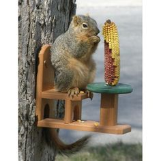 Diy Bird Feeder Discover Songbird Essentials Recycled Poly Squirrel Table and Chair Feeder Songbird Essentials Recycled Poly Squirrel Table and Chair Feeder Squirrel Feeder Diy, Squirrel Food, Suet Bird Feeder, Humming Bird Feeders, Red Squirrel, Bird Food, Outdoor Projects, Wood Projects, Outdoor Decor