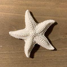 Sea Star Gumpaste Starfish per box) Brighton Map, Star Illustration, Organic Art, Underwater Creatures, Beach Artwork, Art Challenge, Gum Paste, Ocean Life, Community Art