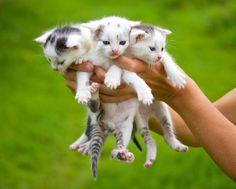 cute cats - Google zoeken