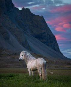 Bekijk deze Instagram-foto van @horsesoficeland • 1,320 vind-ik-leuks