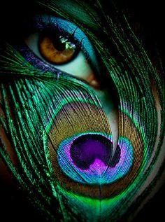 Ojo con pluma de pavo real