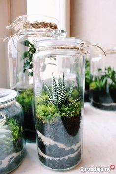 Bottle Terrarium, Mini Terrarium, Succulent Terrarium, Plant In Glass, Paludarium, Cactus, Glass Containers, Small Gardens, Planting Flowers