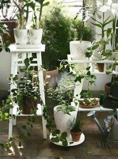 conseils de jardinage et plante sur terrasse ou balcon