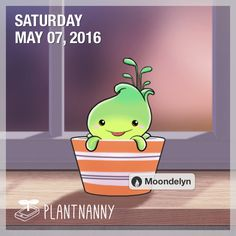 Say hello to my plant! It has absorbed 304 oz of water. Get yourself a plant at http://fourdesire.com/outer_link?url=http://itunes.apple.com/app/id590216134&l=en_US&m=572DE51C