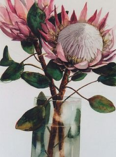 Protea Art, Protea Flower, Watercolor Flowers, Watercolor Paintings, Watercolours, Australian Native Flowers, Australian Wildflowers, Botanical Prints, Painting Inspiration