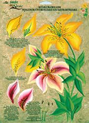 FolkArt ® One Stroke™ Reusable Teaching Guide -Lilies - Donna Dewberry - One Stroke - Painting Supplies - Craft Supplies