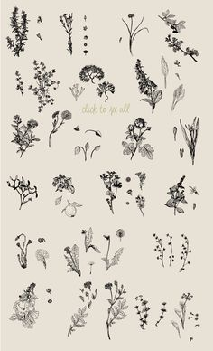 Botanical Vector Collection by Julia Bausenhardt on @creativemarket