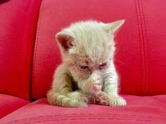 Моззи играет в Буратино..! #mozzy #cat #cats