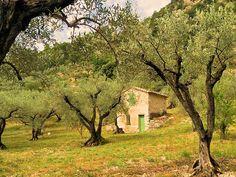 Fête de l'Olivier dimanche 24 mai à Lagnes http://www.luberonweb.com/article,941,fetes-fete-de-lolivier-dimanche-24-mai-a-lagnes.html Fête de l'Olivier et des moulins à huile d'olive du Vaucluse, dimanche 24 mai de 9h à 18h à Lagnes  http://www.luberonweb.com/tourisme-Luberon-Provence/Lagnes-33  Une journée autour des oliviers et de l'huile d'olive : animations de rue, expositions, ...