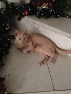 El árbol de Navidad no lo tiré yo... sola!!!
