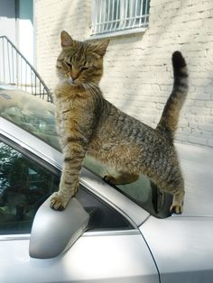 """""""Cats invented self-esteem, there's not an insecure bone in their bodies."""" --Erma Bombeck"""