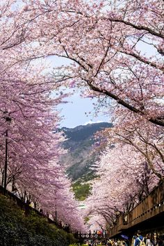 sky on the cherry blossom door by Jonghoon Chun in South Korea Places Around The World, Oh The Places You'll Go, Places To Travel, Places To Visit, Around The Worlds, Beautiful World, Beautiful Places, Beautiful Pictures, Isla Jeju