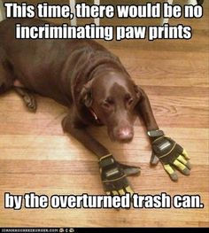 Attack Of The Funny Animals – 62 Pics