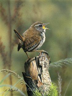 artist Nigel Artingstall by lucia Kinds Of Birds, All Birds, Little Birds, Angry Birds, Wildlife Paintings, Wildlife Art, British Wildlife, All Nature, Tier Fotos