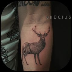 #BRÜCIUS #TATTOO #EUROPE #tour #SanFrancisco #brucius #natural #science #engraving #etching #sculptoroflines #dotwork #blackwork #penandink #lines #nature #Berlin #Germany #AKA #buck