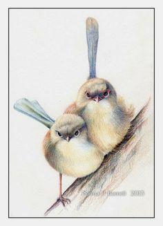 Fairy Tangles: Wrens Bird Drawings, Colorful Drawings, Pencil Drawings, Watercolor Bird, Watercolor Paintings, Bird Paintings, Small Paintings, Watercolours, Bird Artwork