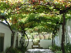 Grape arbor...this is how I imagine mine arching when its grown