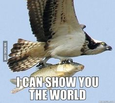 The fish's reaction to being caught – When prey is caught both see eyes get larger. The fish is hang on for an adventure in the air. Animals And Pets, Funny Animals, Cute Animals, Funny Birds, Wild Animals, Beautiful Birds, Animals Beautiful, Beautiful Ocean, Animal Captions