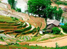 Rice Fields, Saigon, Vietnam