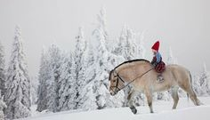 Fjord pony with a kid -- Winter magic photos by Per Breiehagen All The Pretty Horses, Beautiful Horses, Animals Beautiful, Beautiful Creatures, Fjord Horse, Winter Horse, Winter Magic, Horse Breeds, Horse Love