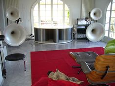 ridiculous speaker system.  ridiculous-er dog. )
