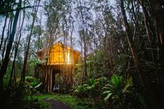 Dreamy Tropical Tree House. - Get $25 credit with Airbnb if you sign up with this link http://www.airbnb.com/c/groberts22