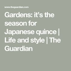 Gardens: it's the season for Japanese quince | Life and style | The Guardian