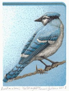 I often noticed birds descending on any berries left in the trees or bushes. As it got later into the fall the berries sometimes became fermented Barn Art, In The Tree, Blue Jay, Blue Bird, Hanging Out, Crow, Angles, Printmaking, Berries