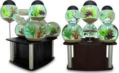 Silverfish Aquarium by Octopus Studios - IcreativeD