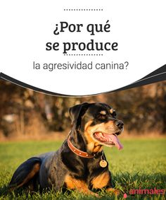 Love For Son, Rottweiler, Tequila, Puppy Love, Best Friends, Hobbies, Puppies, The Moon, Pet Health