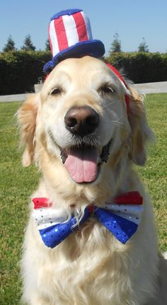 Our patriotic pets enjoyed their of July party! 4th Of July Party, Fourth Of July, Pet Parade, Pet Resort, Cat Grooming, Photo Contest, Great Photos, Animal Rescue, Your Dog