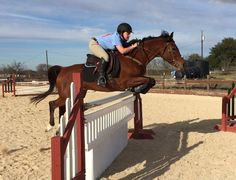 """Rob says this little mare took a """"perfect spot""""!"""