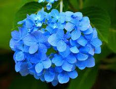 ¡Que belleza de flores azules!