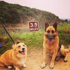 notoriousndk:  Hiking buddies.