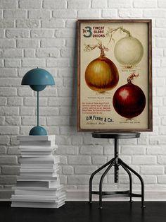 onion as metaphor for how rendering works // Onion Advertisement Poster| Globe Onion| Vintage Botanic illustrations| Kitchen Wall Art| Onion Art Print| Wall Art| Vintage Botany| HBA020