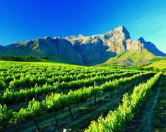 Cape Winelands - One&Only Cape Town, South Africa  South Africa Travel  Information on our Site  http://storelatina.com/southafrica/travelling  #viajarafrica #viaje #viajeafrica #tour