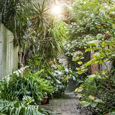 Freya Latona has transformed an inner city dunny lane into a lush, leafy garden. Words by Freya Latona. Images by Daniel Shipp.